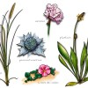 Illustrations faune et flore pour la FFVoile