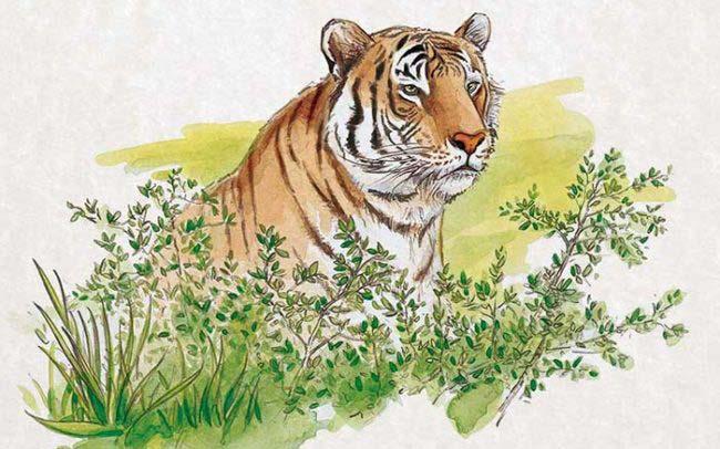 Portfolio aquarelle d'un tigre